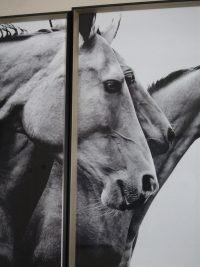 Photo of horse heads